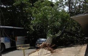 Amma e Prefeitura terão que indenizar mulher atingida pela queda de uma árvore