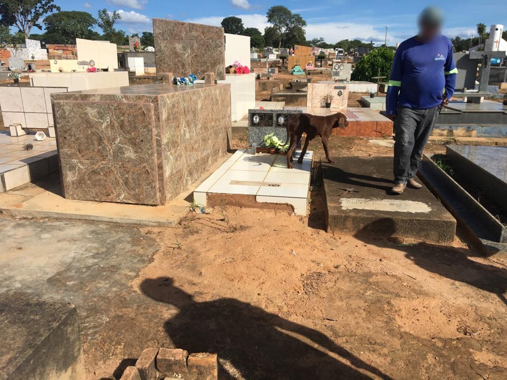 Bombeiros resgatam cachorro em buraco de túmulo no cemitério de Ipameri